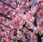 Tokyo's Succulent Sakura (seasonal, 5 hours)