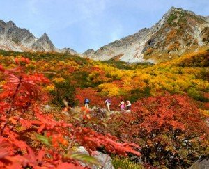 Climbers make their way through forests tinged with autumnal colors in Karasawa Cirque in the Northern Japan Alps.